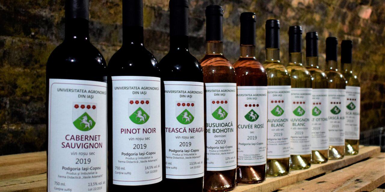 """USAMV Iași, singura universitate unde studenții își produc propriul vin – de la """"bobiță"""" până la etichetă"""
