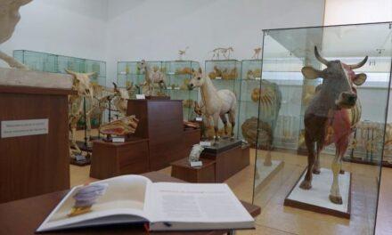 La Muzeul USAMV Iași pot fi realizate vizite episodice tematice