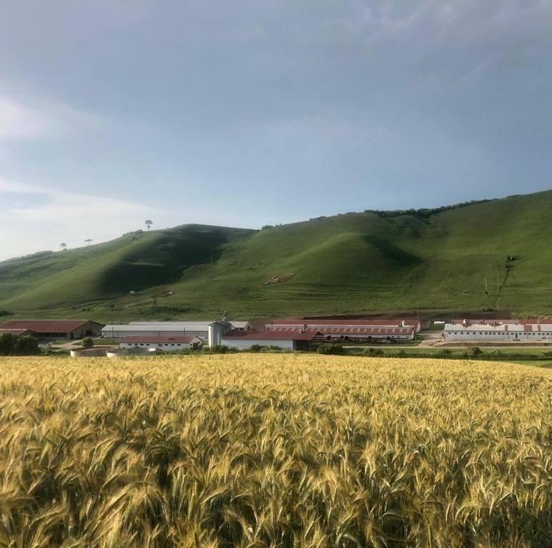 Certificare BIO pentru culturile, animalele și produsele derivate de la fermele USAMV Cluj-Napoc