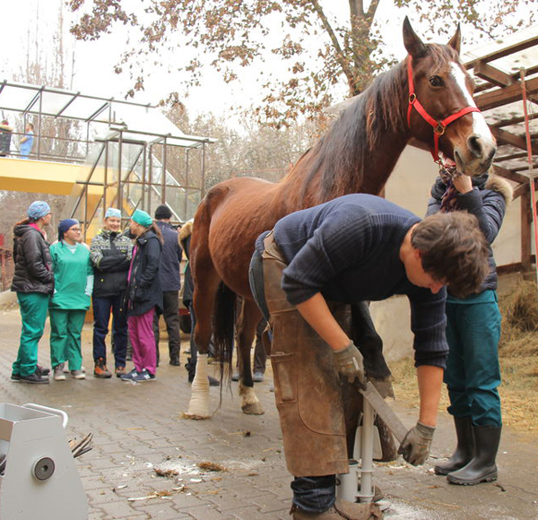 USAMV Cluj-Napoca îi specializează pe studenţi în tainele potcovirii cailor, o meserie pe cale de dispariţie
